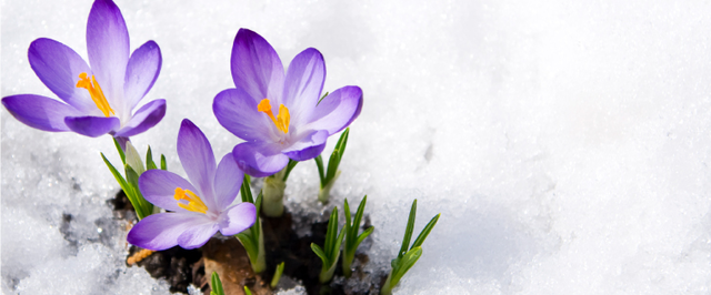 Winterize Your Garden Plant Protection Weed Control Spring