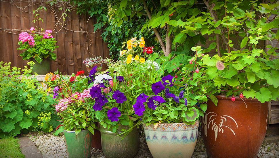 gardening container beds with flowers