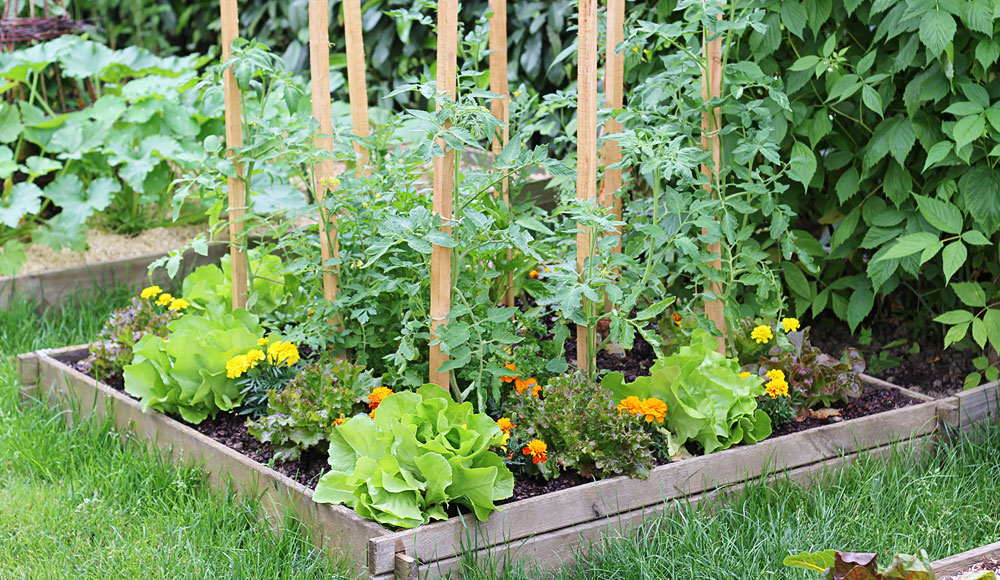 vegetable gardening how to