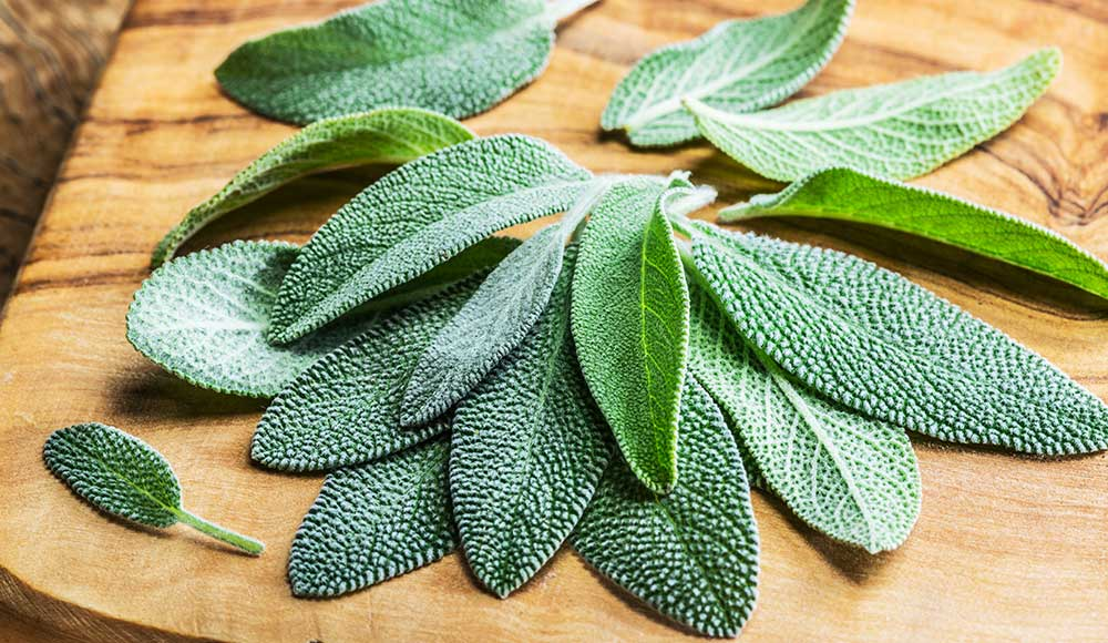 Growing Sage: Your Guide to Planting & Growing a Sage Plant| Gilmour