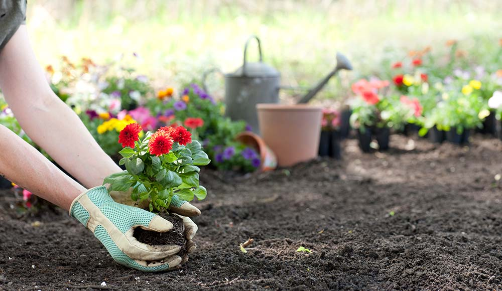 How To Make A Flower Bed And Start A Flower Garden Gilmour